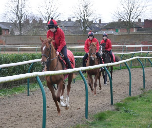 08_cantering_yearlings