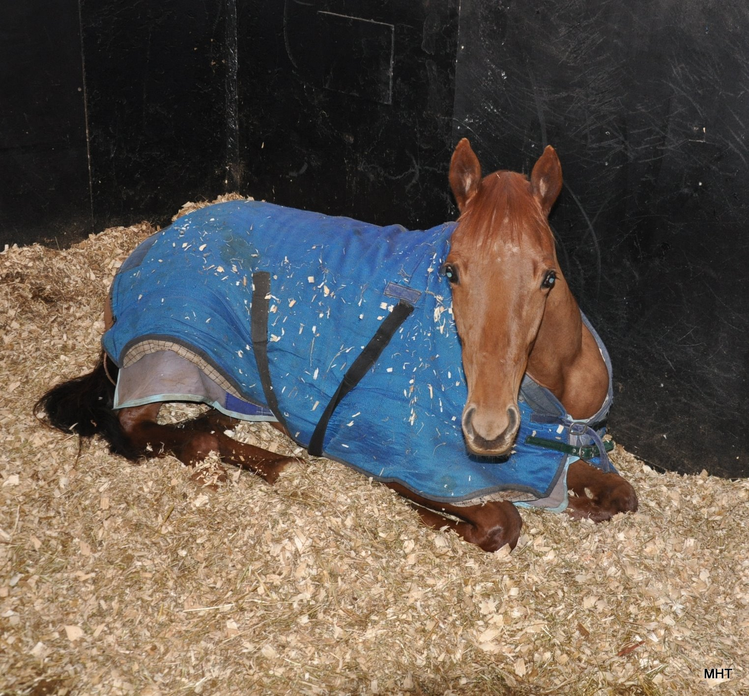 22-_Haafd_filly_relaxing
