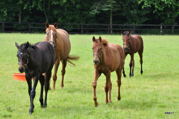 10_-_Mares_and_foals_1