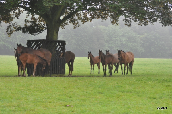 mares_and_foals_shelter