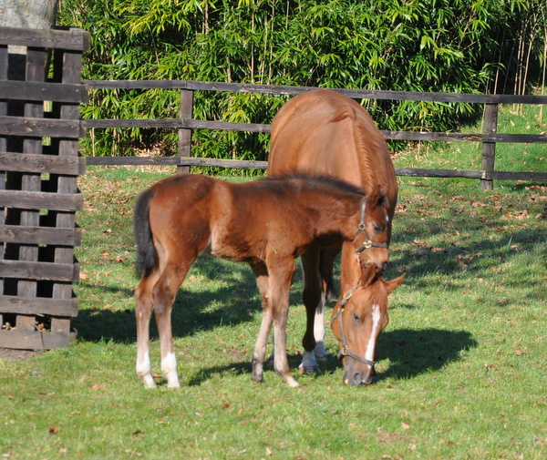 79_Twelfth_Night__foal