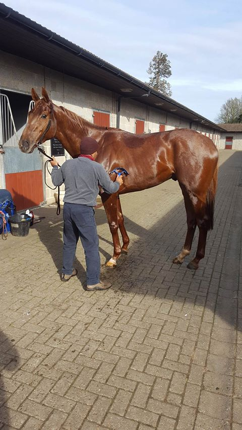 Indian_Red_-_Lingfield