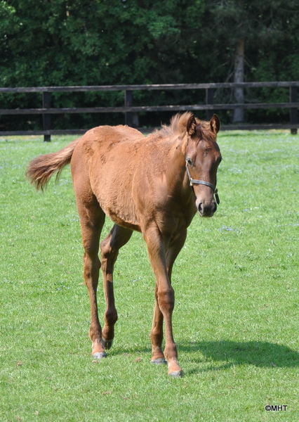 29_-_filly_foal_by_Bahamian_Bounty_ex_Astrodonna