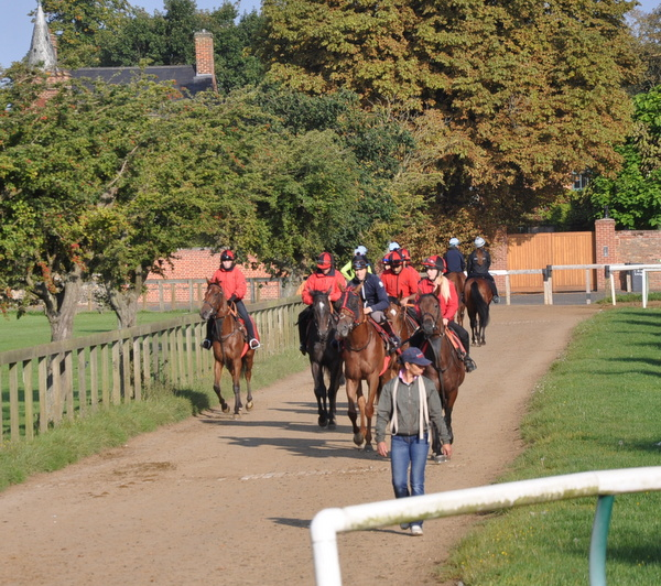 05_Walking_to_the_gallops